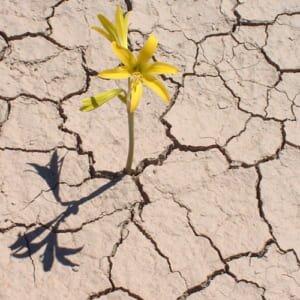 suy nghi ve ve quan diem giua mot vung soi da kho can cay hoa dai van moc len v - Suy nghĩ về về quan điểm: Giữa một vùng sỏi đá khô cằn cây hoa dại vẫn mọc lên và nở những chùm hoa thật đẹp